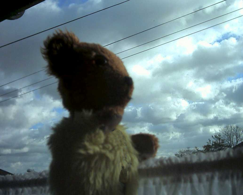 Yellow Teddy watching the wind