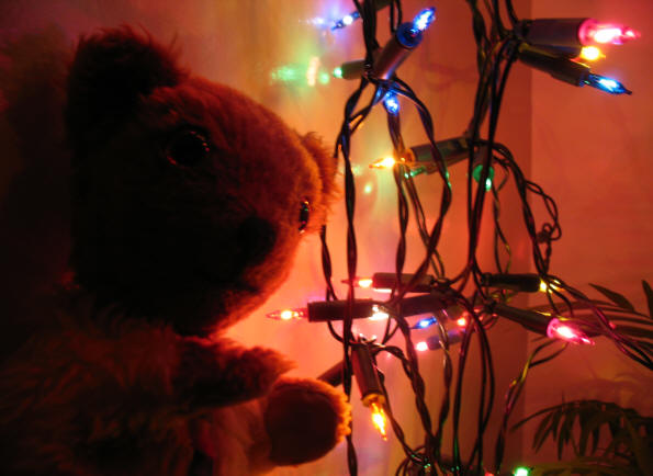 Yellow Teddy with Christmas lights