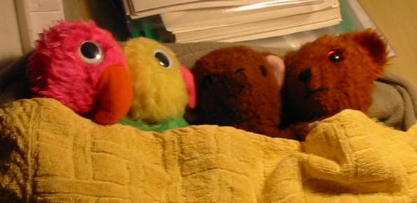 Pink Parrot, Yellow Parrot, Brown Teddy and Yellow Teddy on Christmas Eve