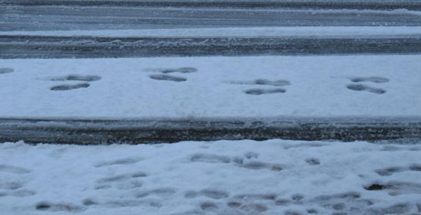 Snowy footprints in pairs