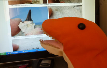 Dino on the fossil website admiring a shark's tooth